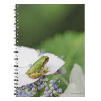 Tree Frog Sitting on a Hydrangea Hyogo Spiral Notebook