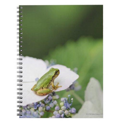Tree Frog Sitting on a Hydrangea, Hyogo Spiral Notebook
