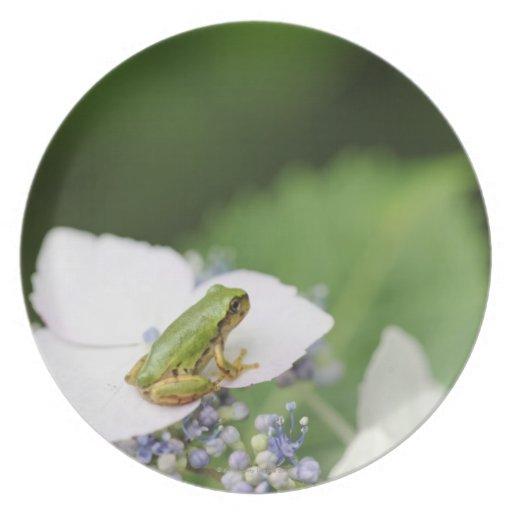 Tree Frog Sitting on a Hydrangea, Hyogo Party Plates