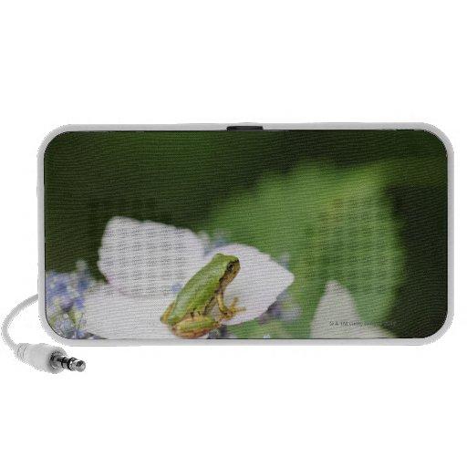 Tree Frog Sitting on a Hydrangea, Hyogo Travel Speakers