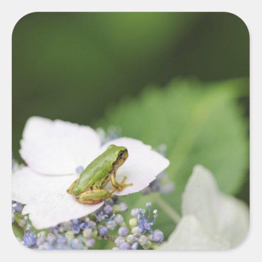 Tree Frog Sitting on a Hydrangea, Hyogo Square Sticker