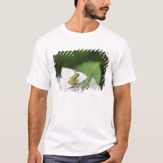 Tree Frog Sitting on a Hydrangea, Hyogo T-Shirt