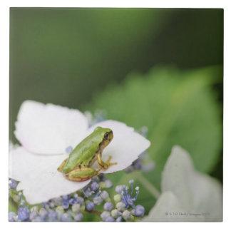 Tree Frog Sitting on a Hydrangea Hyogo Tile