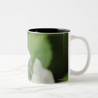 Tree Frog Sitting on a Hydrangea, Hyogo Two-Tone Coffee Mug