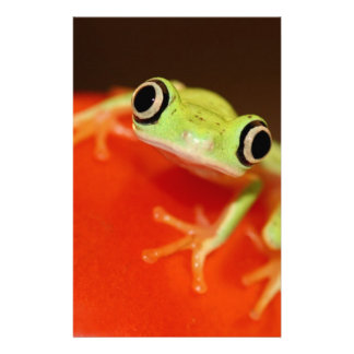 tree frog stationery design