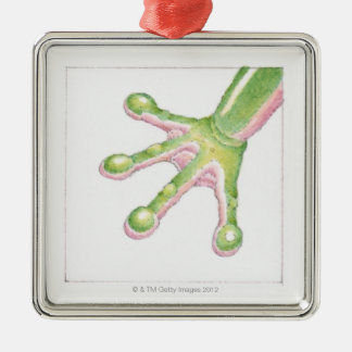 Tree Frog Toes Christmas Ornament