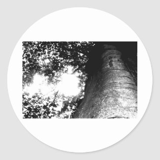 Tree from a Fairytale Classic Round Sticker