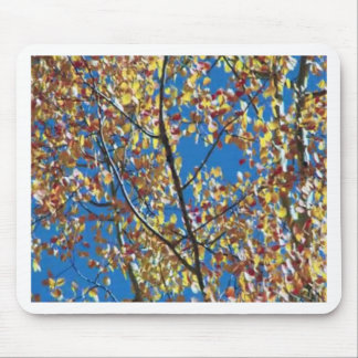 Tree from RedWood Coast America Mouse Pad