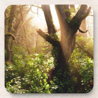 Tree Gloomy Woods Drink Coaster