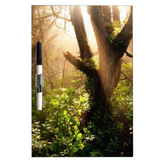 Tree Gloomy Woods Dry-Erase Boards