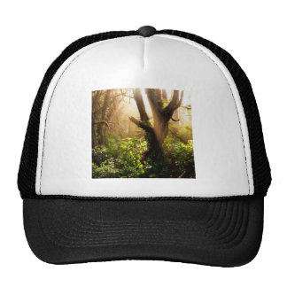 Tree Gloomy Woods Mesh Hats