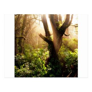 Tree Gloomy Woods Postcard