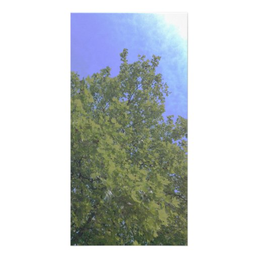 Tree growing to light photo greeting card