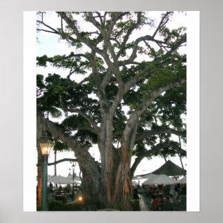 Tree Honolulu, Hawaii Waikiki beach Print