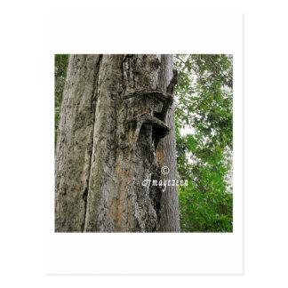 Tree hugger. postcard