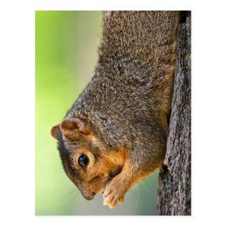 Tree Hugger Postcard