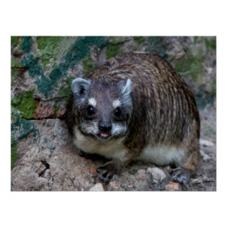 Tree Hyrax Posters
