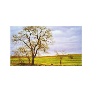Tree In A Field Canvas Print