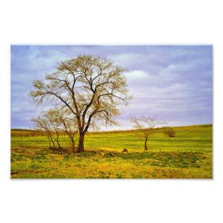 Tree In A Field Photo Print