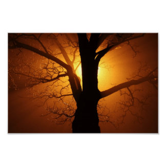Tree In Fog At Night Canvas Print
