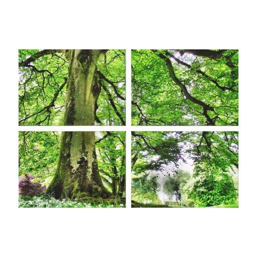 Tree in Greenwood Canvas Art Print Canvas Prints