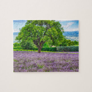 Tree in Lavender Field, France Jigsaw Puzzle