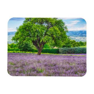 Tree in Lavender Field, France Magnet