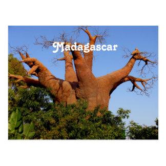 Tree in Madagascar Postcard