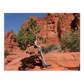 Tree in Sedona, Arizona Postcard