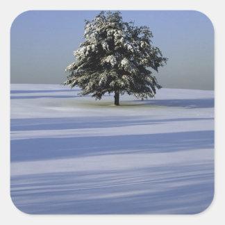 Tree in snow covered landscape square sticker
