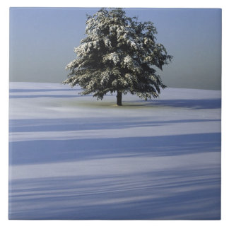 Tree in snow covered landscape tile