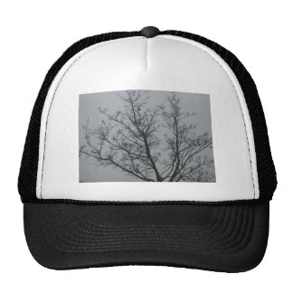 Tree in the fog hats