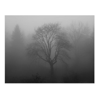 Tree in the fog postcard