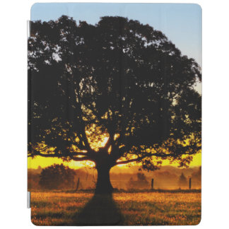 Tree in the Morning iPad Cover