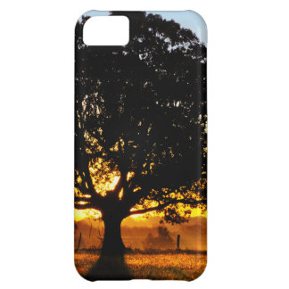 Tree in the Morning iPhone 5C Case