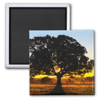 Tree in the Morning Magnet