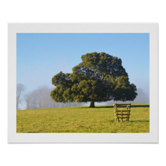Tree in the winter sun poster