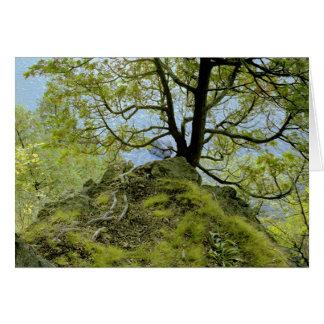 Tree/ Lake Champlain Card
