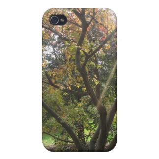 Tree Light Ray Speck iphone 4 Case