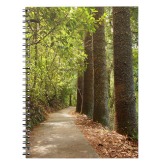 Tree-lined Forest Path - Notepad Spiral Notebook