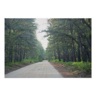 Tree Lined Road Photo Poster