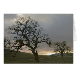 Tree Mates: Winter Oaks with Mistletoe Card