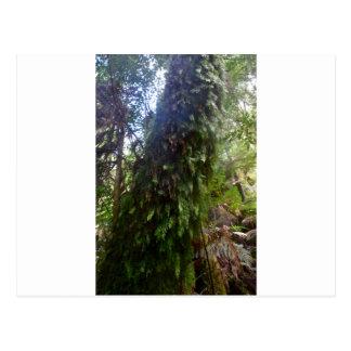TREE MT FIELD NATIONAL PARK TASMANIA POSTCARD
