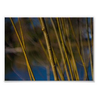 Tree nature photo