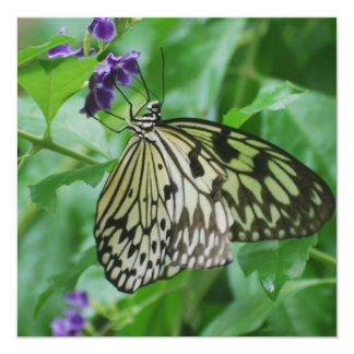 Tree Nymph Butterfly 13 Cm X 13 Cm Square Invitation Card