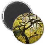 Tree of Life 6 Cm Round Magnet