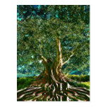 Tree of Life Green Post Card