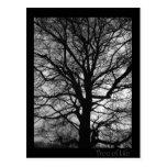 Tree of Life - Lebensbaum - Baum des Lebens Postcards