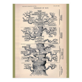 Tree Of Life / Pedigree Of Man Postcard
