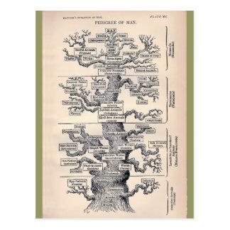 Tree Of Life Pedigree Of Man Postcard